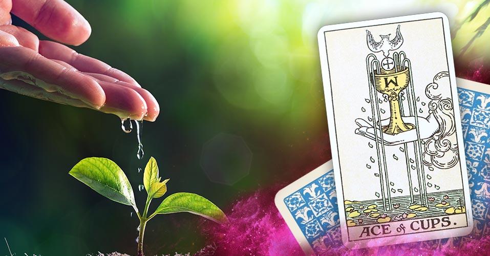 The Ace of Cups Tarot Card